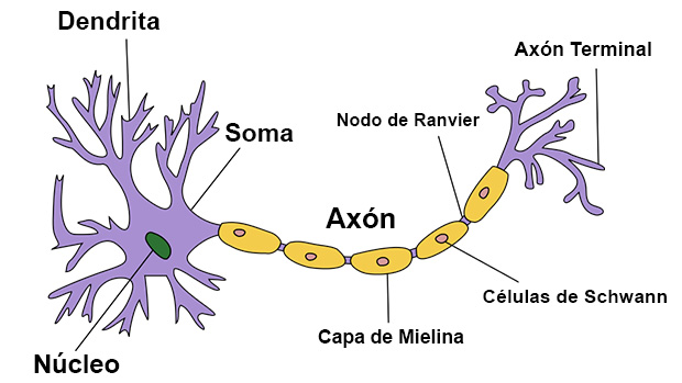 Neuron_Hand-tuned